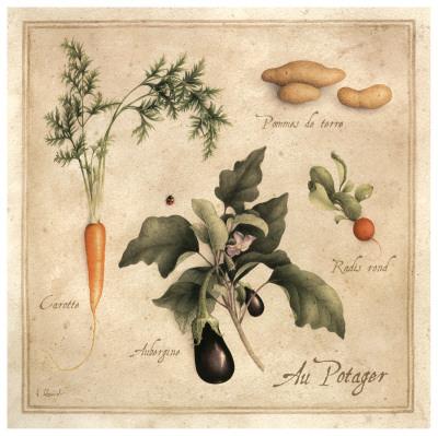 Au Potager Prints by Vincent Perriol