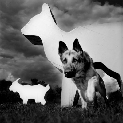 A Dog Walking by Large Animal Figures Lmina fotogrfica
