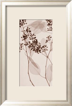 Eucalyptus II Zarámovaná umělecká reprodukce
