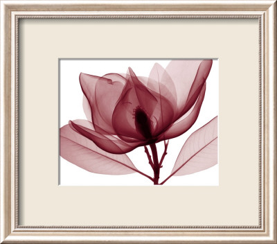 Red Magnolia I Framed Art Print
