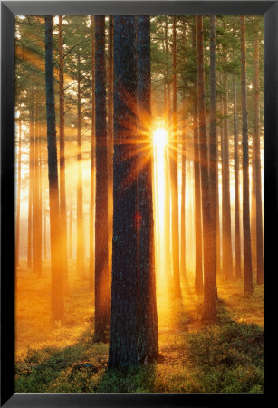 Forest Sunbeams Lamina Framed Poster