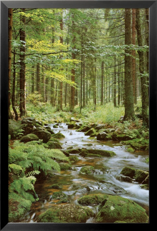 Forest Creek Lamina Framed Poster