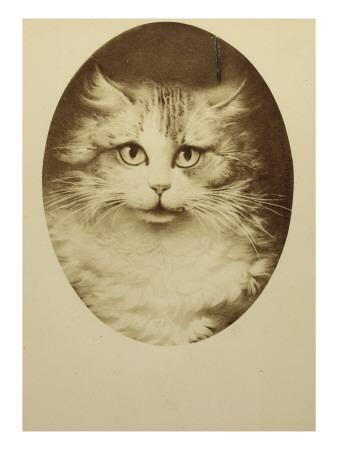 Portrait d'un chat dans un ovale Giclee Print