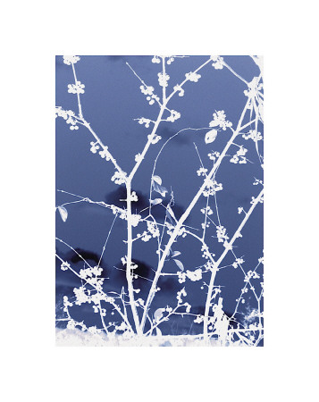 Autumn Branch (blue) reproduction procédé giclée