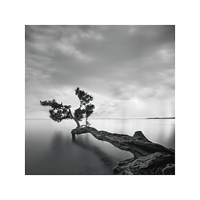 Water Tree Giclee Print by Moises Levy