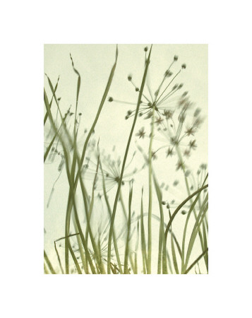 Watery Grasses II reproduction procédé giclée