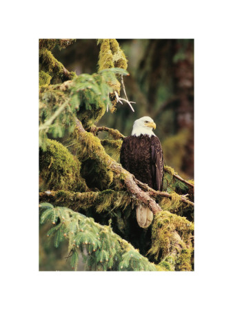 Sentinella silenziosa Alaska Stampa giclée di Art Wolfe