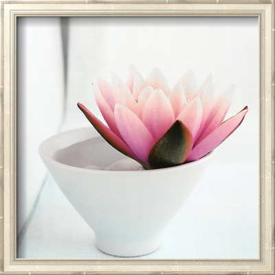 Waterlily Prints by Amelie Vuillon