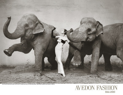 Dovima with Elephants, c.1955 Art Print