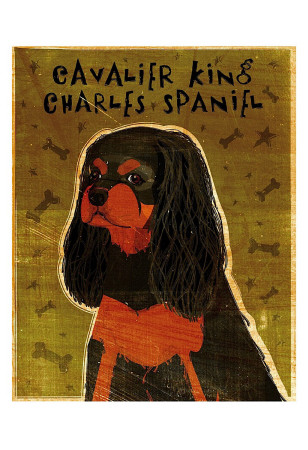 Cavalier King Charles (black and tan) Posters by John Golden