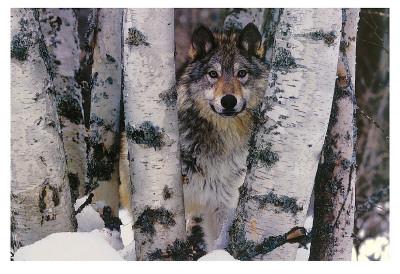 Ranger di montagna Poster di Art Wolfe