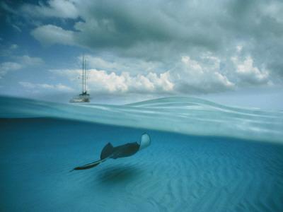 A Stingray and Sailboat in North Sound Stampa fotografica di David Doubilet
