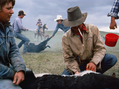 Cowboys on a Cattle Ranch Photographic Print