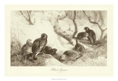 Black Game Giclee Print by A. Thorburn