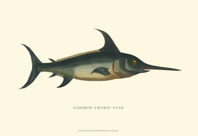 Common Swordfish Prints