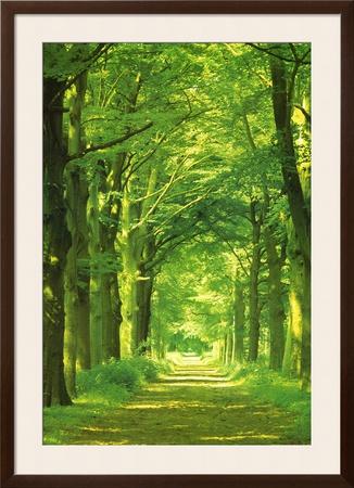 Forest Path Prints by Hein Van Den Heuvel