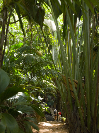 Tourists in a Palm Tree Forest at the Vallee De Mai Nature Reserve Photographic Print by Alison Wright