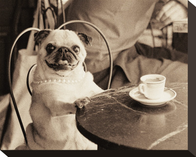 Cafe Pug Stretched Canvas Print by Jim Dratfield