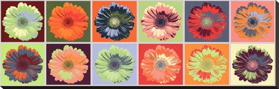 Gerbera Spectrum Stretched Canvas Print
