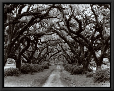 Path in the Oaks II, Louisiana Framed Canvas Print by Monte Nagler