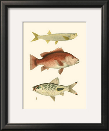 Antique Fish II Posters by Ernest Briggs