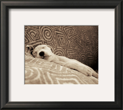 Dog Tired Poster by Jim Dratfield