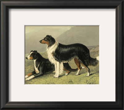 Sheep Dogs Print by Vero Shaw