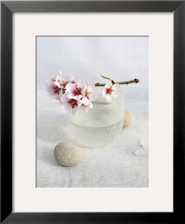 Almond Tree Poster by Amelie Vuillon