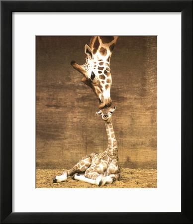 Giraffe, First Kiss Posters by Ron D'Raine