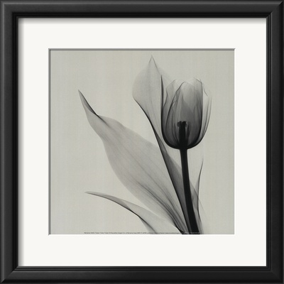 Tulip Poster by Marianne Haas