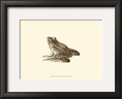 Sepia Frog I Poster by J. H. Richard