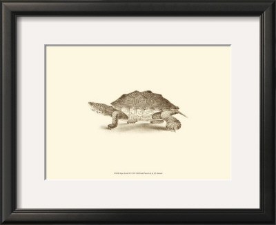 Sepia Turtle II Prints by J. H. Richard