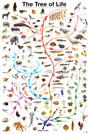 Evolution - The Tree of Life Póster