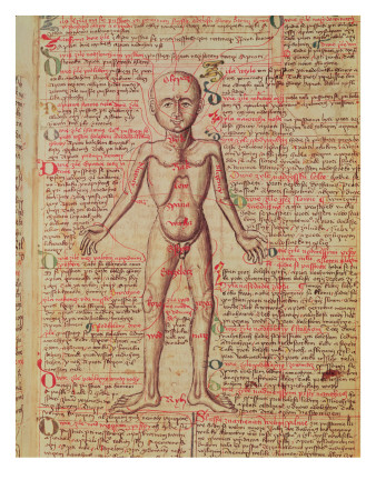 Anatomy of the Human Body, from 'Tractatus De Pestilencia' Giclee Print