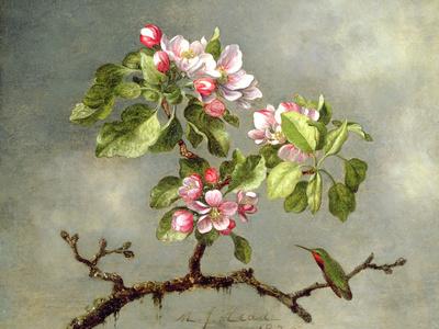 Apple Blossoms and a Hummingbird, 1875 Premium Giclee Print by Martin Johnson Heade