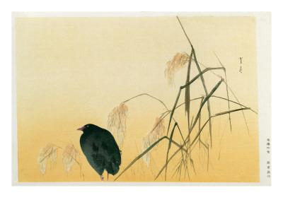 Blackbird, Edo Period Premium Giclee Print by  Japanese School