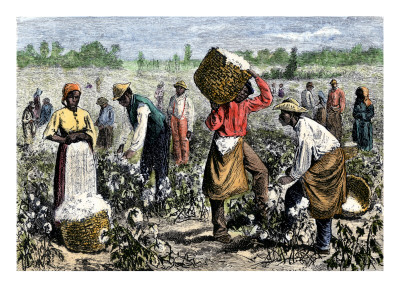 slaves picking cotton. Slaves Picking Cotton