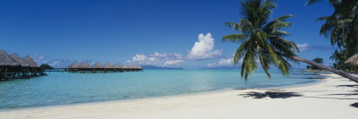 Palm Tree on the Beach, Moana Beach, Bora Bora, Tahiti, French Polynesia Wallstickers
