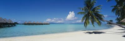 Palm Tree on the Beach, Moana Beach, Bora Bora, Tahiti, French Polynesia Vinilo decorativo