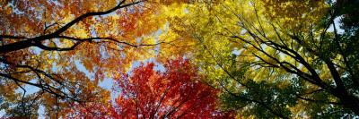 Farverige træer om efteråret taget skudt fra en lav vinkel Wallstickers
