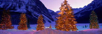 Lighted Christmas Trees, Chateau Lake Louise, Lake Louise, Alberta, Canada Vinilos decorativos
