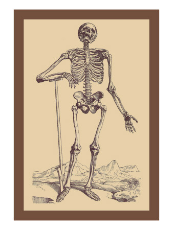 Skeleton with Shovel Wall Decal by Andreas Vesalius