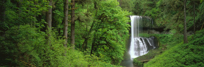 Silver Falls State Park, Oregon, USA Wall Decal by  Panoramic Images