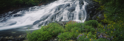 Waterfall in the Forest, Mt. Rainier National Park, Washington State, USA Wall Decal by  Panoramic Images