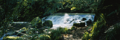 Waterfall in the Forest, Birks O' Aberfeldy, Perthshire, Scotland Wall Decal by  Panoramic Images