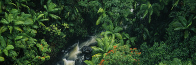 Waterfall in a Rainforest, Hamakua Coast, Hawaii, USA Wall Decal by  Panoramic Images
