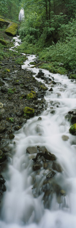 Stream Flowing Through a Forest, Wahkeena Waterfall, Columbia River Gorge, Oregon, USA Wall Decal by  Panoramic Images