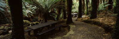 Picnic Tables in a Forest, Temperate Rainforest, Tarra-Bulga National Park, Victoria, Australia Wall Decal by  Panoramic Images