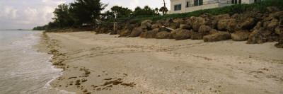 Loggerhead Turtle Tracks on the Beach, Casey Key, Osprey, Sarasota County, Florida, USA Wall Decal by  Panoramic Images