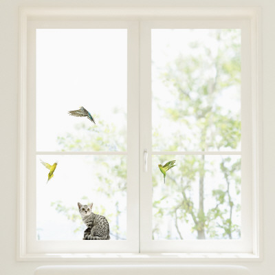 Budgerigars and Cat Window Decal Sticker Pencere Çıkartmaları